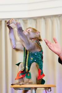 дрессированные обезьятки харьков