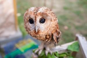 прокат совы на праздник Харьков